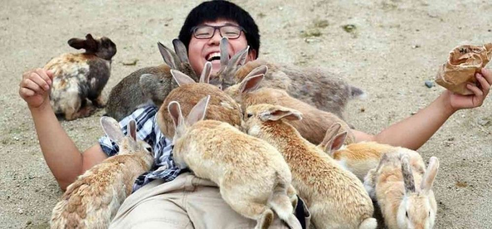 your-travel-guide-to-bunnies-at-okunoshima-in-japan-1400x653-1503066968_1100x513