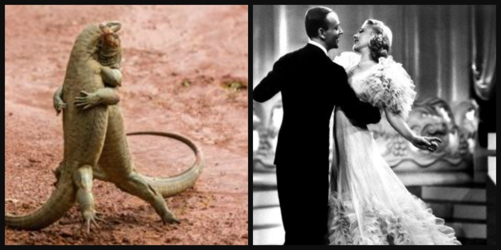 103_lizards_fred_astaire