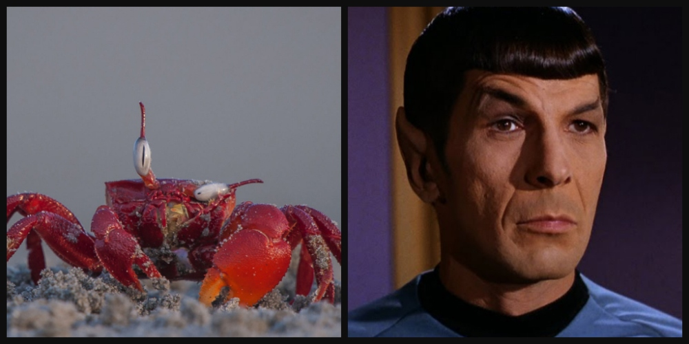 303-red-crab-spock-raised-eyebrow.jpg