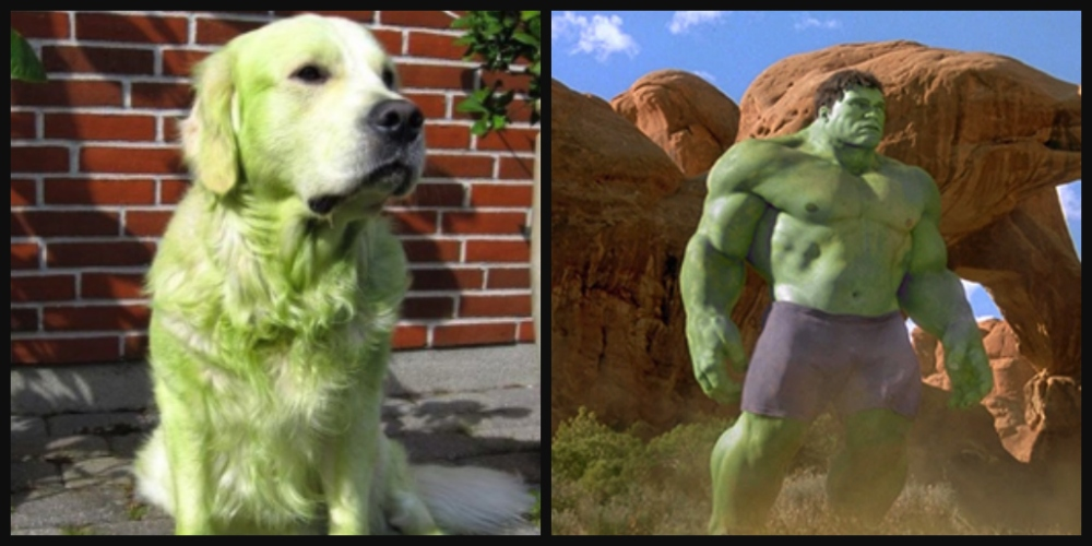 310_goldenRetrieverHulk__angLeeHulk